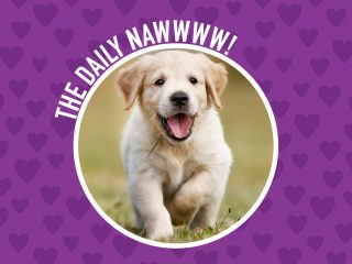 The Daily NAWWWW! Get Baby Animal Pics Delivered Daily